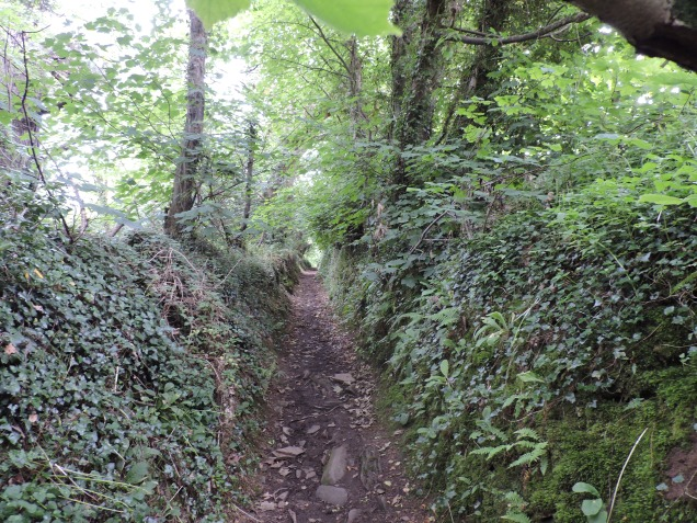 Through the woods to Helford