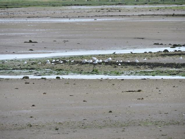 Estuary at Aberlady