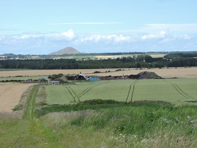 I didn't take many photos on this walk - too busy chatting!  The hill in the distance is North Berwick Law (now that's a high hill!).  The 'farm' like buildings in the middle turned out to be an abattoir which smelled disgusting and made us walk very fast!
