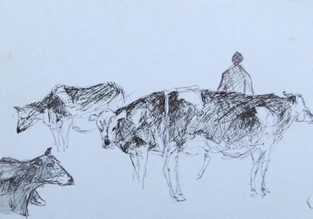 Cows sketch