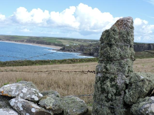View back to Halzephron - look at all that lovely lichen proving that the air is clean up here!
