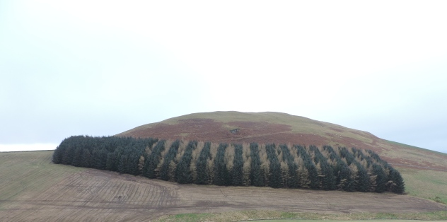 I love how these trees seem to be in alternate rows - I didn't notice it at the time I took the picture.